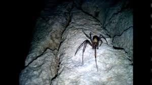 Znalezione obrazy dla zapytania jaskinia wierzchowska