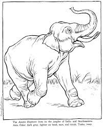 Elephant Coloring Pages Zoo Animals Coloring Home