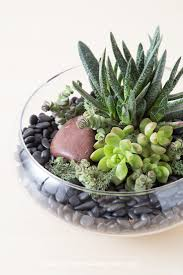 How To Grow Succulents Indoors Succulents And Sunshine