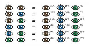 Eye Genetics Chart Eye Color Chart What Color Eyes Will My Baby Have