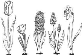 Voorjaar Virágok Bloemen Tekenen Plant Tekening En Voorjaar