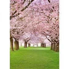 Cherry Blossom Backdrop Cherry Blossom Backdrop 6x8