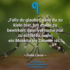 Dalai Lama Seine Besten Zitate Bluemindtv