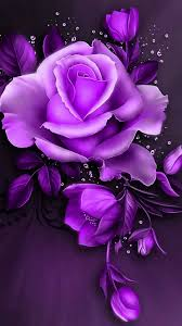 Purple Flowers Backgrounds Beautiful Pink Rose Wallpapers Images Good Night Purple