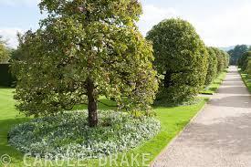 Underplanting Fruit Trees