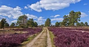 Lüneburg Heath Nature Park The Largest Interconnected Heath Areas