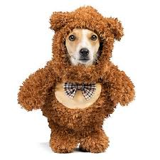 Thrills Chills Halloween Teddy Bear Walker Pet Costume