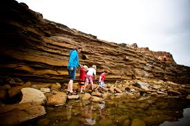 Tide Chart Carlsbad Ca 8 San Diego Tide Pools To Explore With Kids