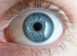Image result for eyes