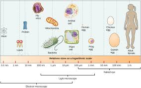 Comparing Prokaryotic And Eukaryotic Cells Biology I