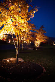 landscape lighting trees. Fine Trees Low Voltage Lighting To Highlight Tree Illumination Of Landscape Features With Trees L