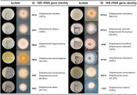 Petri Dish Bacteria Identification Chart Frontiers Diversity And Functions Of Volatile Organic
