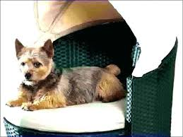 elevated pet bed raised dog outdoor with canopy small nutmeg elev