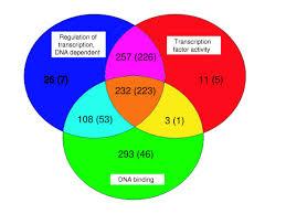 Venn Diagram Bioinformatics Venn Diagram Presenting T Yale Image Finder