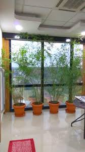 Small Picture 83 best Indoor Outdoor Garden Design and Maintanance images on