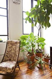 35 best indoor plants good inside
