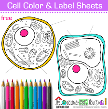 Small Picture Free Cell Coloring Page Animal Plant Cell Color and Label
