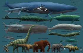 Dinosaur Sizes Comparison Chart I Always Find Size Comparison Charts Awesome Heres Some
