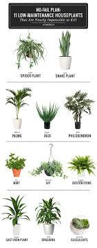 11 Low Maintenance Houseplants = Best Plants for Bathroom