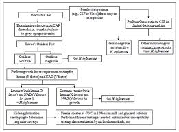 Laboratory Diagnosis Of Haemophilus Influenzae Learn