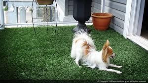 artificial grass for pets. Artificial-grass-safe-for-pets-004 Artificial Grass For Pets S