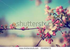 Free Spring Free Spring Photos Librestock