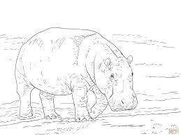 Pygmy Hippopotamus Coloring Page From Hippopotamus