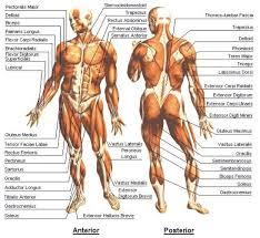 Chiropractic Body Chart Unfriedchiropractic