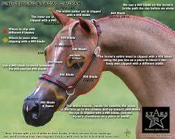 Facial Clipping Diagram