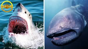 10 ฉลามเจ้าสมุทรที่หายากและดุร้ายที่สุด คุณคงไม่อยากเจอมันแน่ๆ (ขออยู่ห่างๆ  ดีกว่า!) - YouTube
