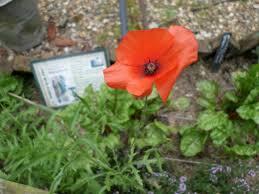 The Wartime Kitchen And Garden Wartime Garden Worldwarzoogardener1939s Blog