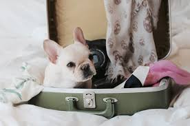 Traveling With Pets: Airline and Hotel Policy Roundup