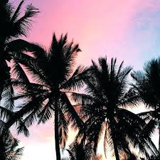 Palm trees tumblr header California Dreaming Palm Tree Tumblr Beautiful Sunset Over Trees Header Dirosa Palm Tree Tumblr Trees Design Decorating Pool Header Dirosa
