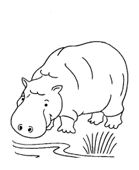 Wild Animal Coloring Page Hippopotamus Coloring Page Gifties