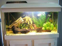 office pet ideas. Medium Image For Office Pet Ideas Gallery Of Aquarium Styles