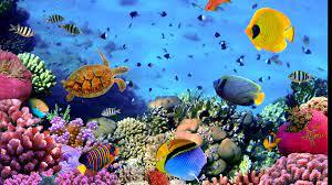 3840x2160, Aquarium Wallpaper For ...