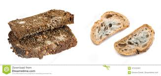 Mold On Black Bread Isolated Stock Image Image Of Dirty Toxic
