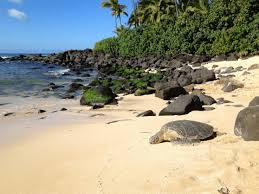 Bucket List Watching Swimming With Turtles At Laniakea