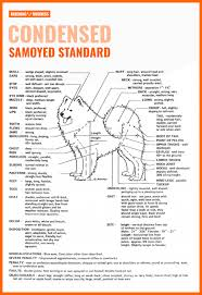 How To Breed Samoyeds Health Litter Size Background Faq