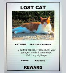 lost and found flyers lost cat flyer template word terri torigram sites