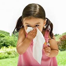 Your 365-Day Guide to Allergies and Asthma: 13 Seasonal Allergies ...