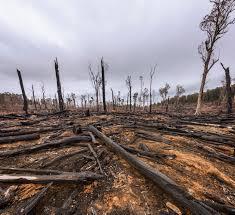Logging A Dead Loss For Victoria Friends Of The Earth Melbourne