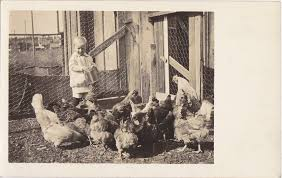 Image result for 1930s chickens in west bend