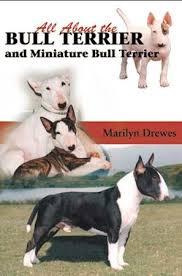 miniature bull terrier vs standard. Delighful Bull Bull_terrier_dog_bookjpg ALL ABOUT BULL TERRIERS AND MINIATURE  For Miniature Bull Terrier Vs Standard R