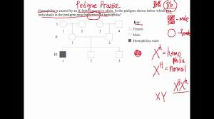 How To Solve Pedigree Diagram Questions Ib Biology