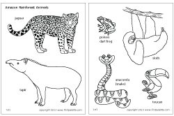 Small Picture Jungle Rainforest Animals Printable Templates Coloring Pages