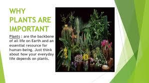Importances Of Plants Importances Of Plants Home Design