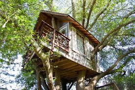 Treehouse Pictures Treehouse Above San Francisco Bay Treehouses For Rent In