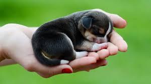 cute puppy wallpaper cute puppy