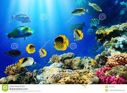 Pesci tropicali sopra la barriera corallina fotografia stock